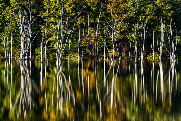 Photograph - Deadwood by Mihai Andritoiu