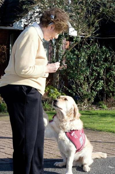 Dog Treat Photograph - Deaf Woman And Her Hearing Dog by Life In View/science Photo Library