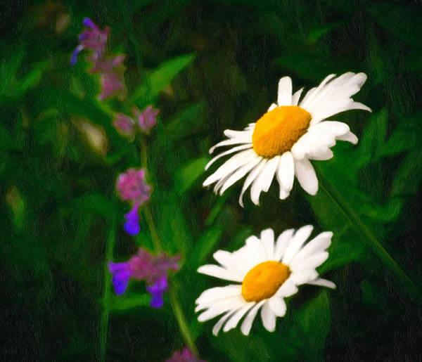 Photograph - Dear Daisy by Garvin Hunter
