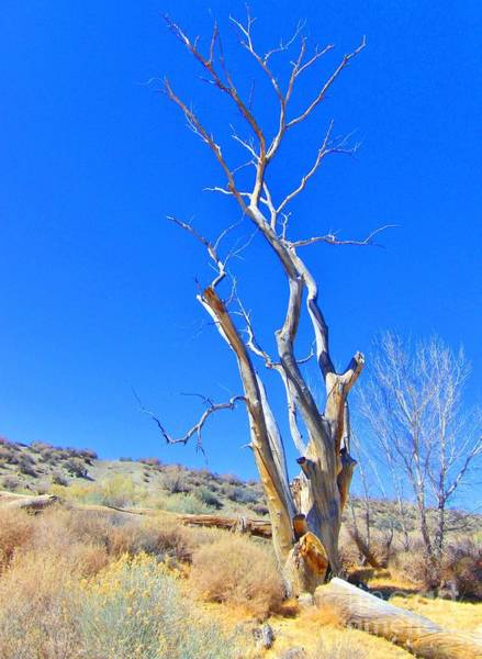 Bishop Hill Photograph - Death In The Desert by Marilyn Diaz