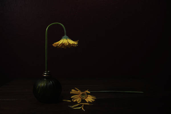 Vases Photograph - Death Of A Relative by Darlene Hewson