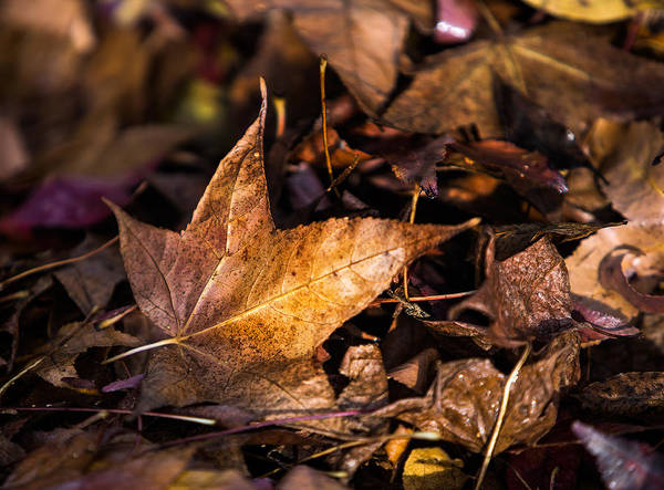 Photograph - Death Of Autumn by Mark Lucey