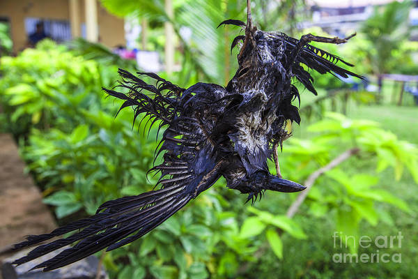 Ragamuffin Photograph - Death Raven Hanging In The Rope by Gina Koch