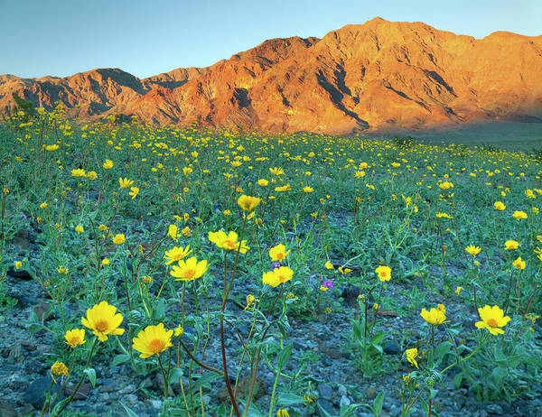 Similar Photograph - Death Valley National Park, California by Scott T. Smith