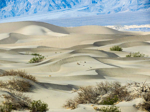 Death Valley Np Photograph - Death Valley National Park - Mesquite Sand Dunes II by Patti Deters