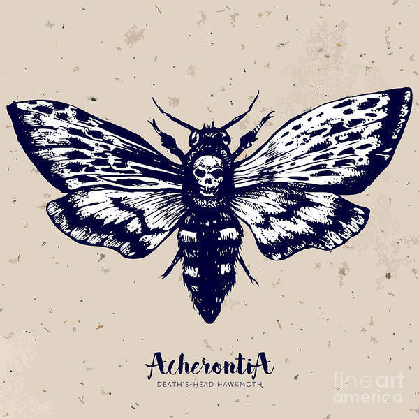 Engraved Digital Art - Deaths-head Hawkmoth. Hand Drawn Vector by Inna Sinano