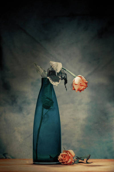 Vases Photograph - Decay - Dying Rose by Howard Ashton-jones