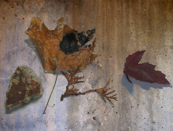 Digital Art - Decayed Leaf Still Life On Concrete 1 by Anita Burgermeister