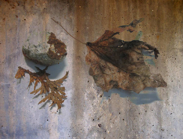 Digital Art - Decayed Leaf Still Life On Concrete 2 by Anita Burgermeister