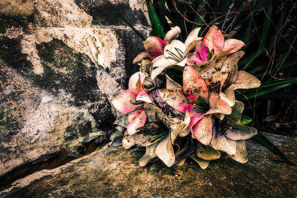 Photograph - Decayed Pink by Melinda Ledsome