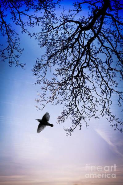 Uplift Photograph - December Chill by Jan Bickerton
