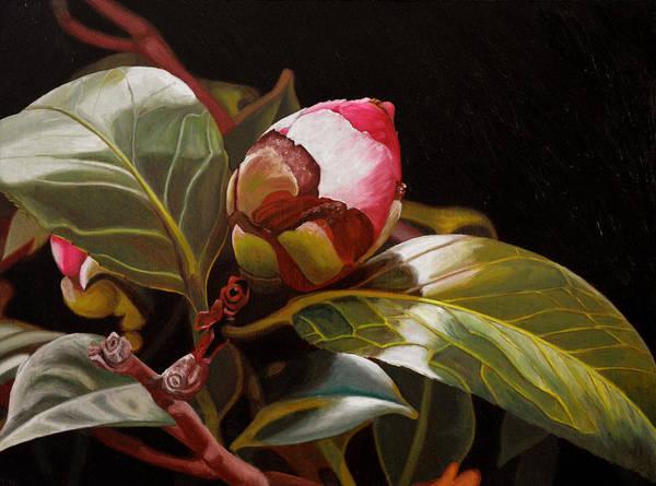 December Rose Art Print