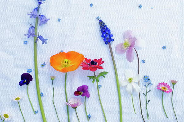 Wall Art - Photograph - Deconstructed Posy Of Spring Flowers by Ally T