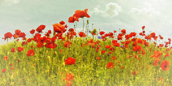 Wall Art - Photograph - Decorative-art Field Of Red Poppies by Melanie Viola