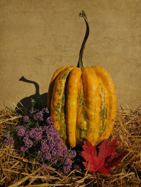 Wall Art - Photograph - Decorative Gourd  by Chris Berry