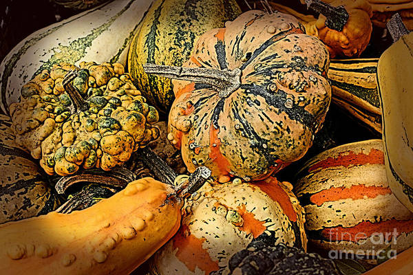 Photograph - Decorative Gourds by Smilin Eyes  Treasures