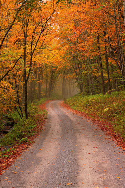 Photograph - Deep Autumn Forest Road by Harold Rau
