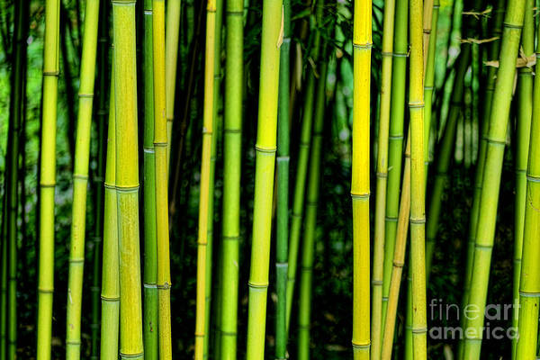 Wall Art - Photograph - Deep Bamboo by Olivier Le Queinec