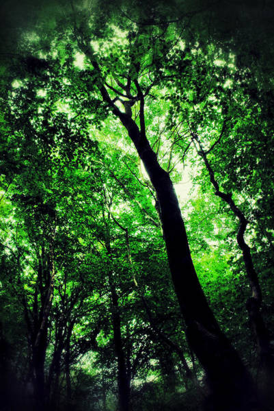 Deep Woods Wall Art - Photograph - Deep Forest by Ian Hufton