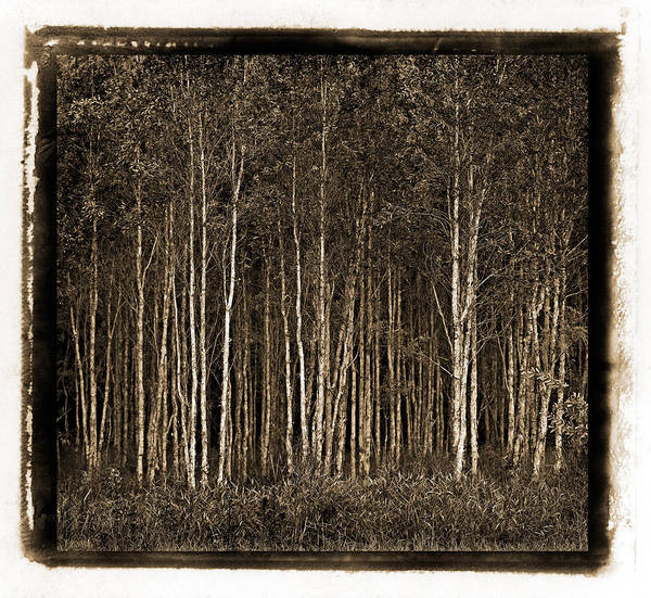 Photograph - Deep Forest by Russell Brown