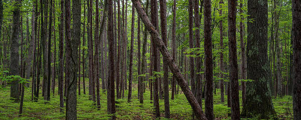 Manistee Photograph - Deep Forest by Steve Gadomski