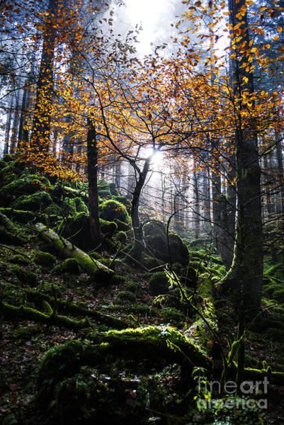 Wall Art - Photograph - Deep Forest by Yuri San