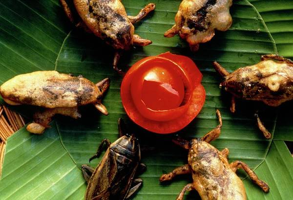 Chang Mai Wall Art - Photograph - Deep-fried Giant Water Bugs by Peter Menzel/science Photo Library