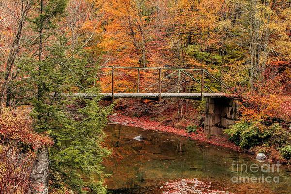 Photograph - Deep In Autumn by Deborah Benoit
