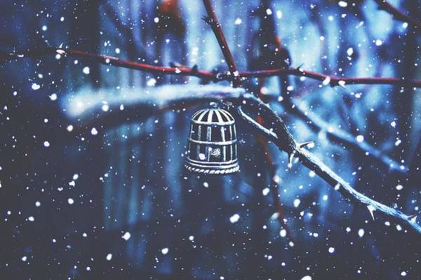 Birdcage Photograph - Deep In The Snowy Blues by Angie Marie Photography