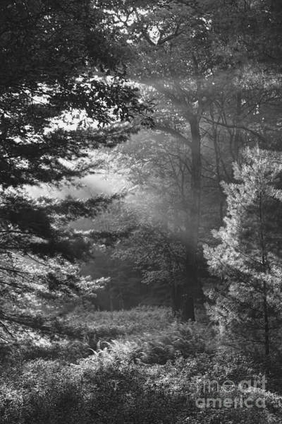 Photograph - Deep In The Woods by Jeff Breiman