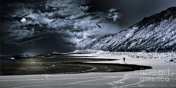 Gentoo Wall Art - Photograph - Deep Into That Darkness  by Stelios Kleanthous