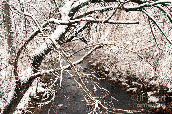 Photograph - Deep Run In Winter 3 by Chris Scroggins