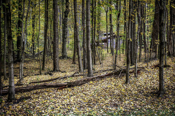 Bright Photograph - Deep Woods Cabin by Tom Mc Nemar