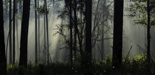 Blye Photograph - Deep Woods by Kenneth Blye