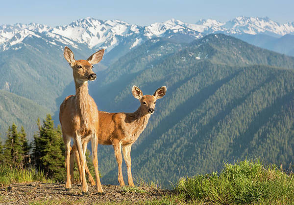 Cute Photograph - Deer And Mountains by Kencanning