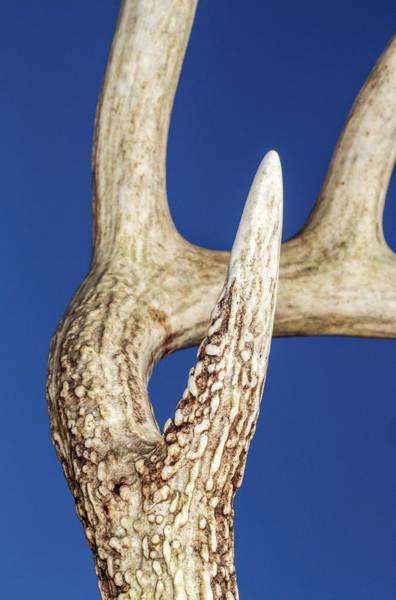 Photograph - Deer Antler Detail by Steven Schwartzman