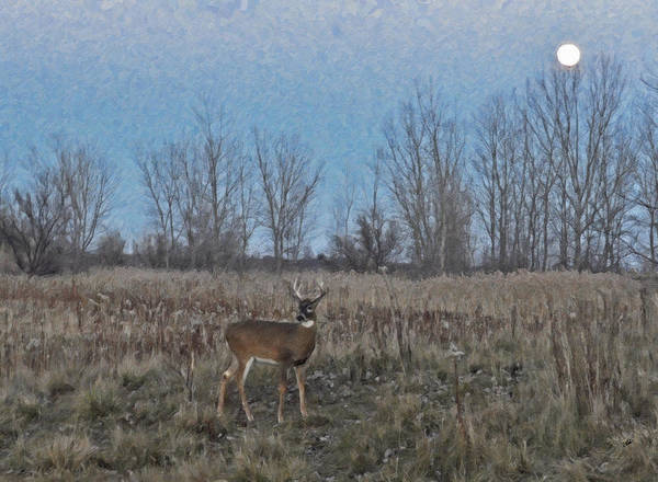 Painting - Deer At Dusk In Field by Dean Wittle
