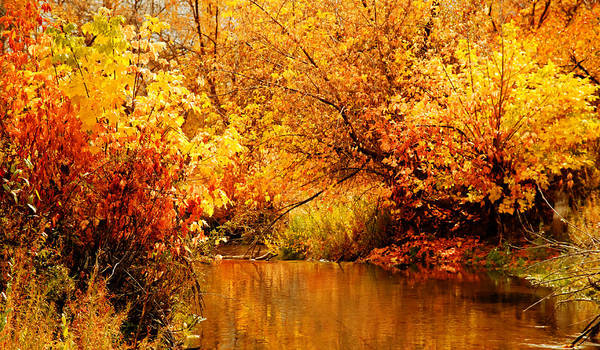 Photograph - Deer Creek Autumn by TL  Mair