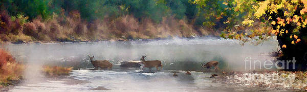 Photograph - Deer Crossing Stream Panoramic by Dan Friend