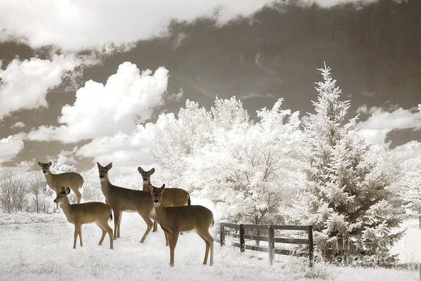 Winter Deer Photograph - Deer Nature Winter - Surreal Nature Deer Winter Snow Landscape by Kathy Fornal