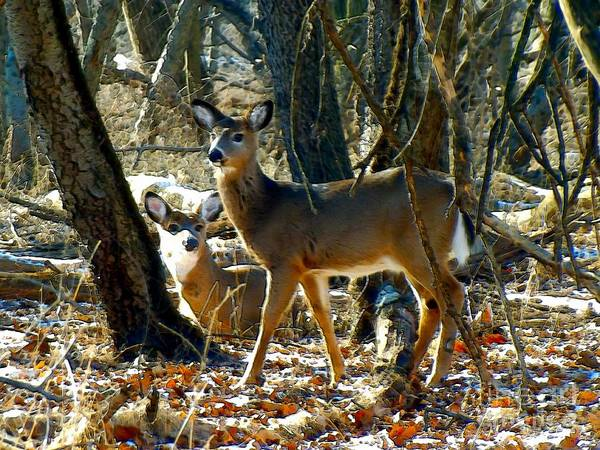 Photograph - Deer Friends by Robyn King