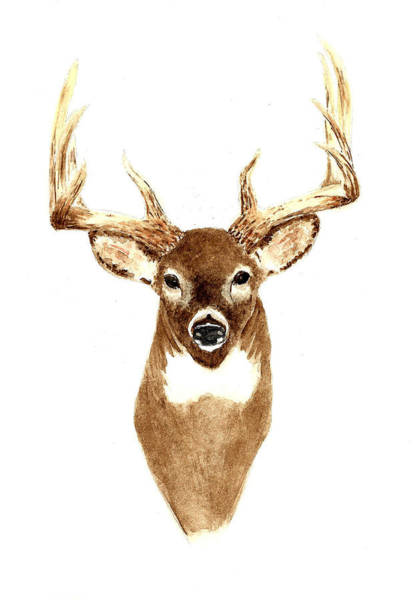 Antlers Painting - Deer - Front View by Michael Vigliotti