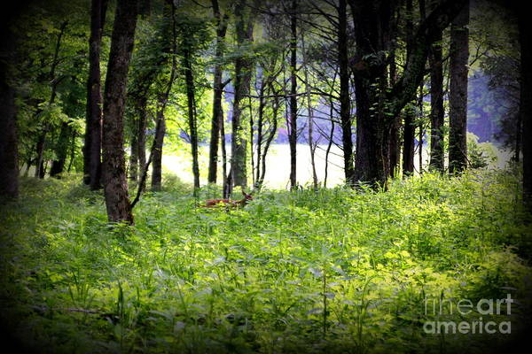 Photograph - Deer Glade by Cynthia Mask