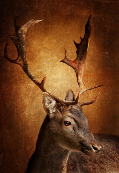 Wild Life Mixed Media - Deer by Heike Hultsch