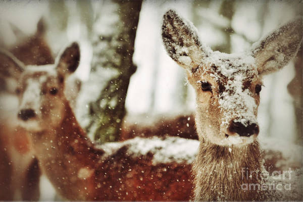 Deer In The Snow Art Print