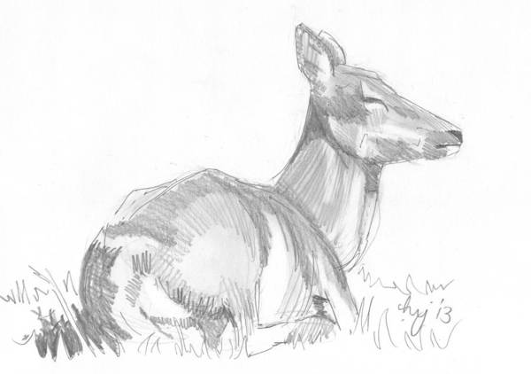 Drawing - Deer Lying Down Drawing by Mike Jory