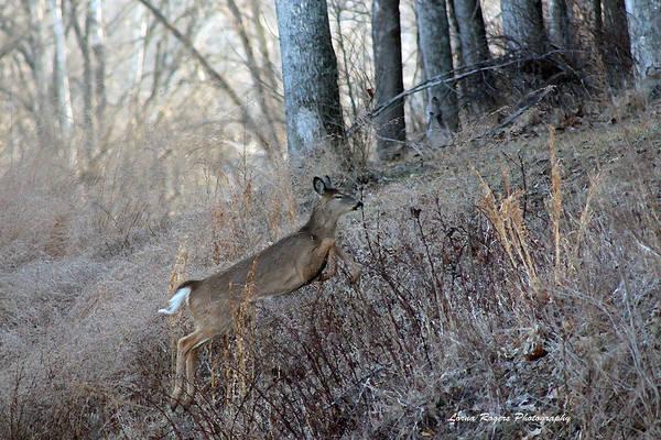 Photograph - Deer Moving Upward by Lorna R Mills DBA  Lorna Rogers Photography