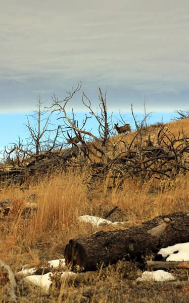 Photograph - Deer On Ridge  by Jennifer Robin
