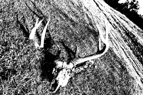 Deer Skull Digital Art - Deer Rack And Skull by David Turner