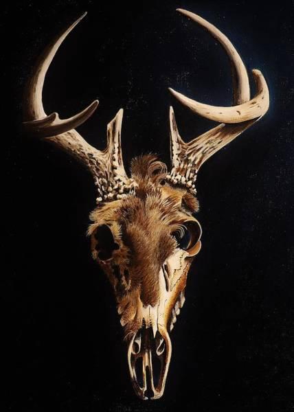 Black Buck Painting - Deer Skull by Joy Bradley